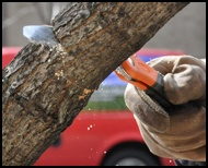 How to prune your tree