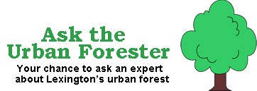 Ask forester page topper